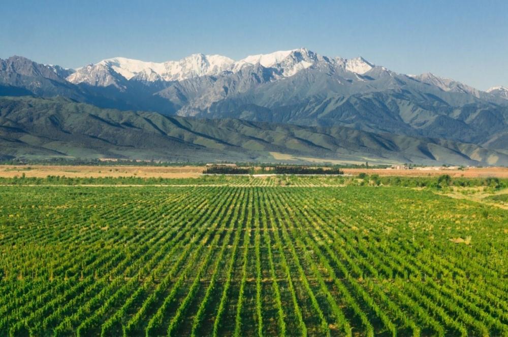 Arba-Wine-vineyards-1200x798